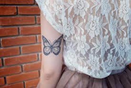 borboletas4